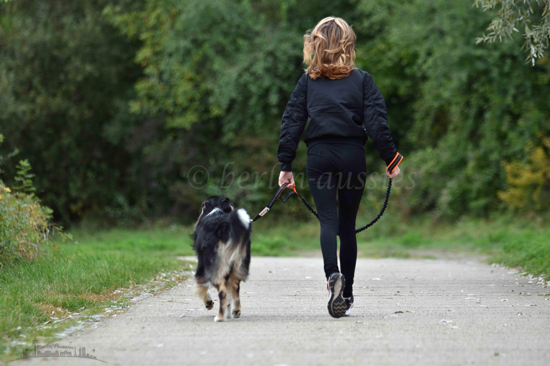 Australian Shepherd black tri